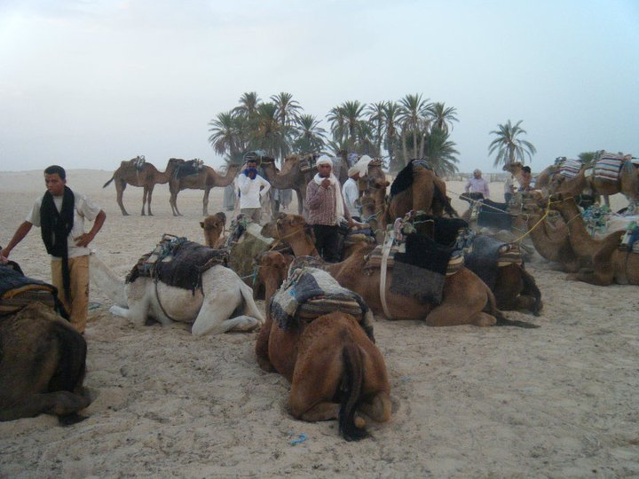 Camel riding in the Sahara Desert