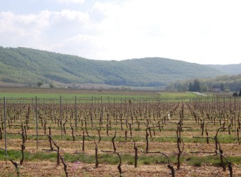 French Vineyards