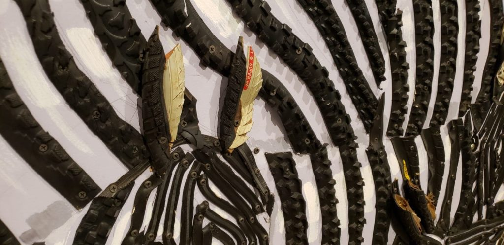 Zebra Animalia